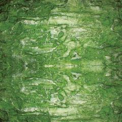 自然色硅藻泥涂装客厅卧室儿童房电视背景墙辊涂喷涂墙面翡翠玉 可定制(定金)